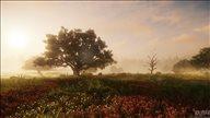 亚马逊新作《新世界》最新截图 山清水秀,美若仙境