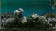 《Biotope》游戏截图 制作专属鱼缸饲养鱼类