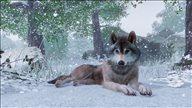 《过山车之星》厂商新作《动物园之星》公布 建造管理最狂野的动物园